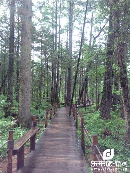 【东来独立团】伊春、五营森林公园、汤旺河石林、嘉荫茅兰沟、恐龙地质公园、双卧5日清肺之旅