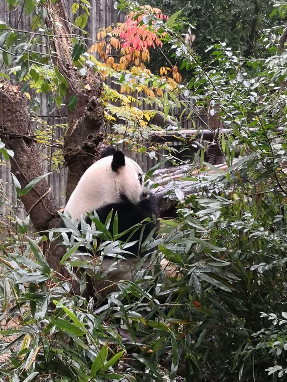 九寨沟、熊猫基地、乐山、峨眉山、都江堰、黄龙双飞8日游